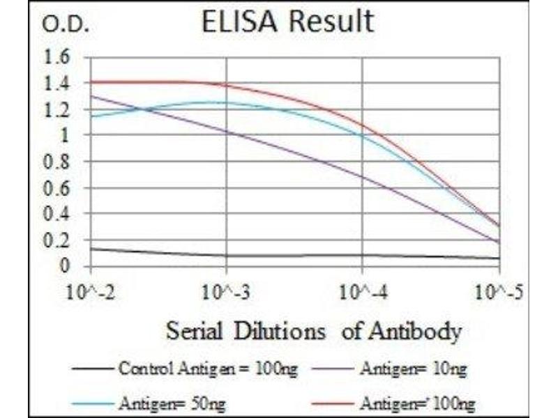 ELISA image for anti-Insulin-Like Growth Factor 2 (IGF2) antibody (ABIN4321597)