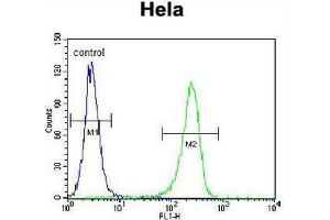 Flow Cytometry (FACS) image for anti-Cyclin H antibody (CCNH) (N-Term) (ABIN951761)