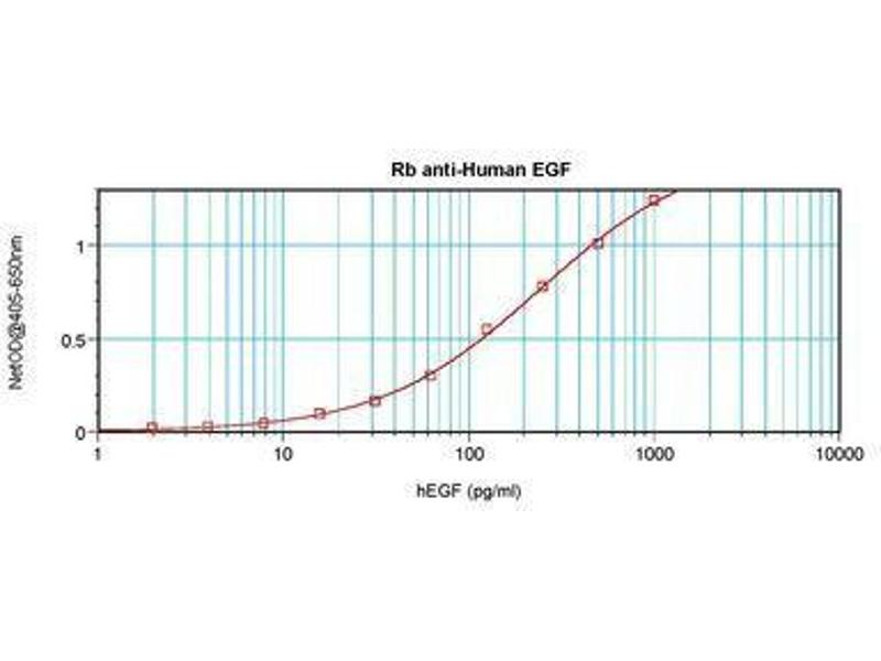image for anti-Epidermal Growth Factor (EGF) antibody (ABIN465547)