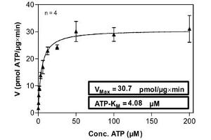 Image no. 2 for PTK6 Protein tyrosine Kinase 6 (PTK6) (AA 1-451) protein (His-GST) (ABIN5569664)