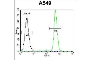 Image no. 3 for anti-Hematological and Neurological Expressed 1 (HN1) (AA 58-86) antibody (ABIN5532572)