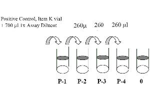 Image no. 3 for Signal Transducer and Activator of Transcription 1, 91kDa (STAT1) ELISA Kit (ABIN625231)