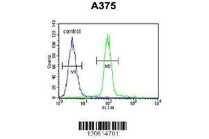 anti-APOBEC1 Complementation Factor (A1CF) (AA 394-423), (C-Term) antibody