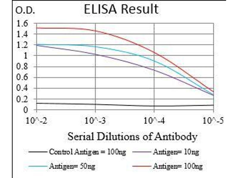 ELISA image for anti-CAMK2G antibody (Calcium/calmodulin-Dependent Protein Kinase II gamma) (AA 322-481) (ABIN2682978)