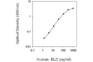 Image no. 1 for Chemokine (C-X-C Motif) Ligand 13 (CXCL13) ELISA Kit (ABIN3032894)