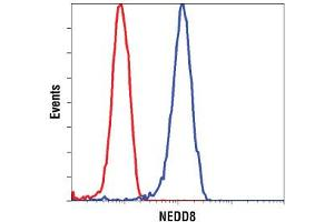 Image no. 3 for anti-Neural Precursor Cell Expressed, Developmentally Down-Regulated 8 (NEDD8) (N-Term) antibody (ABIN221543)