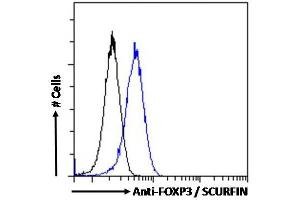 Image no. 5 for anti-Forkhead Box P3 (FOXP3) (C-Term) antibody (ABIN184677)