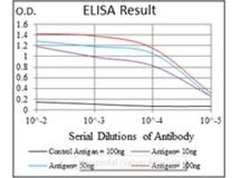 ELISA image for anti-Argininosuccinate Synthase 1 (ASS1) antibody (ABIN1105454)