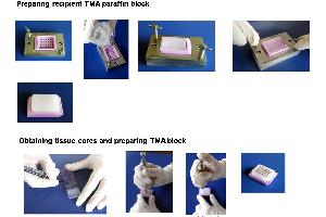 image for Tissue Microarray Builder (TMA Builder) (2mm diameter) (ABIN370822)