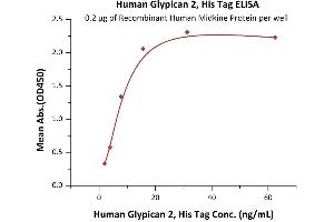 Image no. 1 for Glypican 2 (GPC2) (AA 24-554) (Active) protein (His tag) (ABIN7013370)