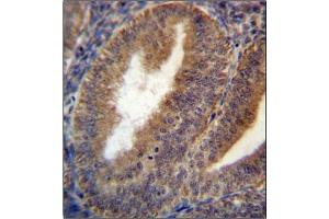 Image no. 1 for anti-Ras-Related GTP Binding C (RRAGC) (AA 168-198), (Middle Region) antibody (ABIN954628)