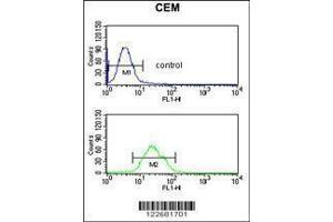 Flow Cytometry (FACS) image for anti-V-Raf Murine Sarcoma Viral Oncogene Homolog B1 (BRAF) antibody (ABIN1881118)