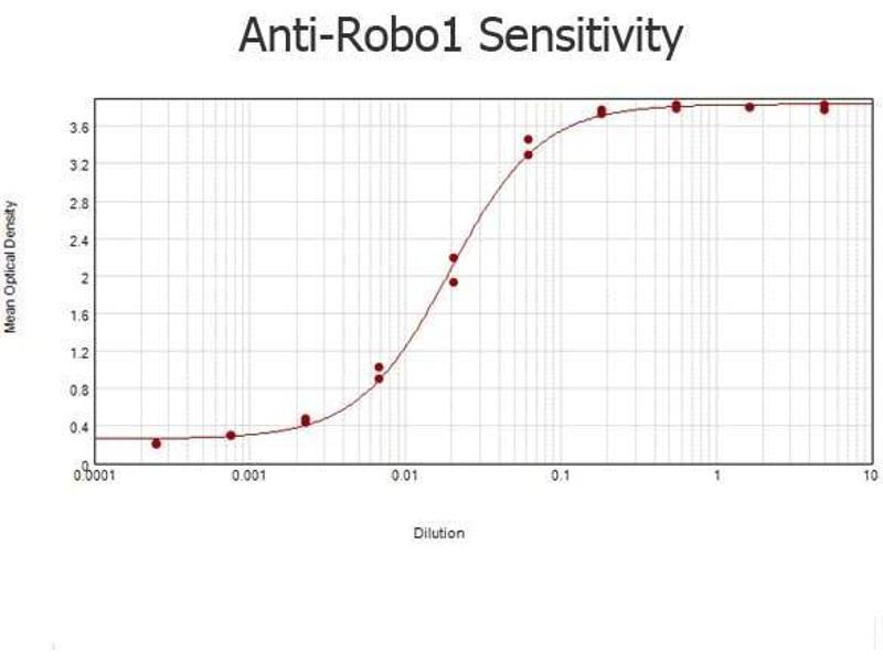 Image no. 4 for anti-Roundabout, Axon Guidance Receptor, Homolog 1 (Drosophila) (ROBO1) (AA 1632-1644) antibody (ABIN129621)