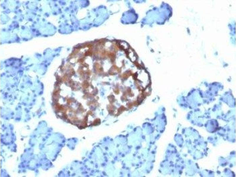 Immunohistochemistry (IHC) image for anti-Chromogranin A (CHGA) antibody (ABIN3024534)