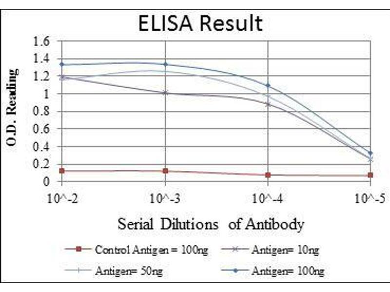 ELISA image for anti-Cortactin antibody (CTTN) (ABIN969073)