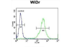 Image no. 3 for anti-Family with Sequence Similarity 3, Member B (FAM3B) antibody (ABIN3002861)
