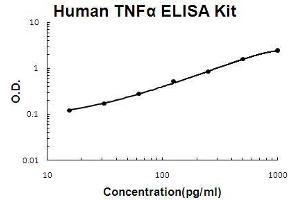 ELISA image for Tumor Necrosis Factor (TNF) ELISA Kit (ABIN411361)