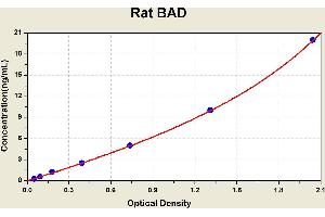 Image no. 1 for BCL2-Associated Agonist of Cell Death (BAD) ELISA Kit (ABIN1113697)