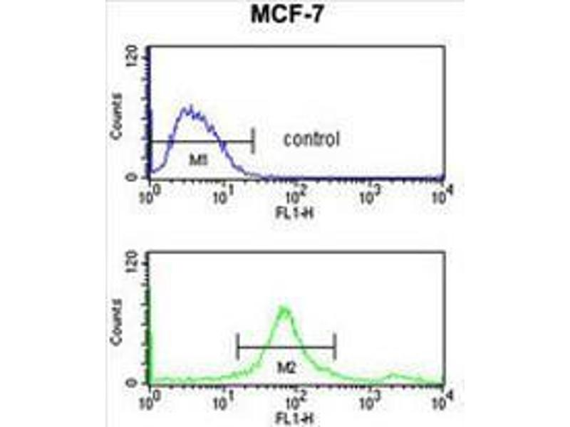 Flow Cytometry (FACS) image for anti-SMT3 Suppressor of Mif Two 3 Homolog 1 (S. Cerevisiae) (SUMO1) antibody (ABIN955007)