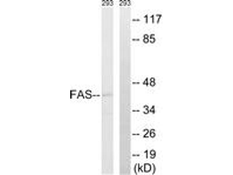 Western Blotting (WB) image for anti-Fas (TNF Receptor Superfamily, Member 6) (FAS) (AA 257-306) antibody (ABIN1532613)
