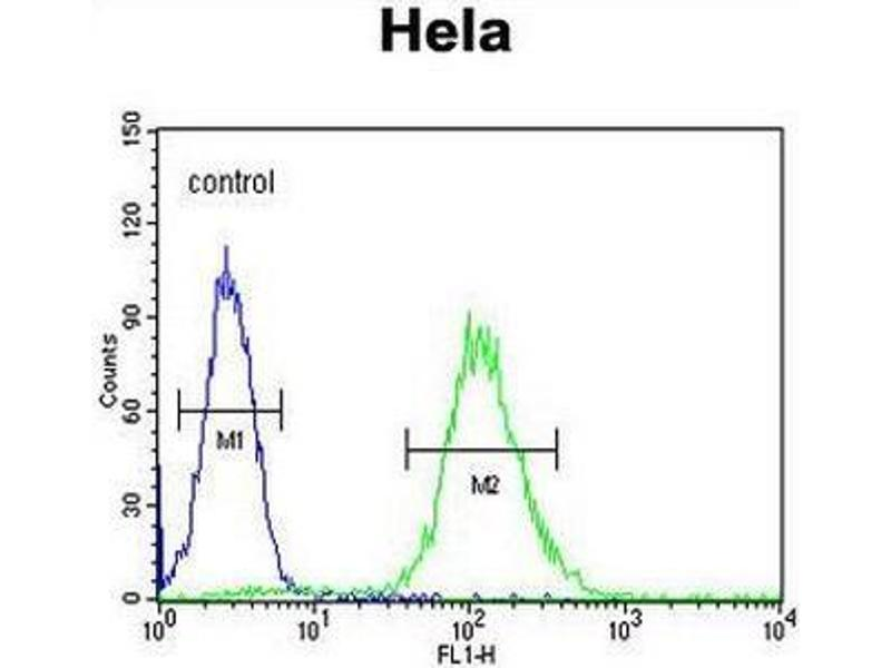 Flow Cytometry (FACS) image for anti-Cyclin G1 (CCNG1) (AA 20-53), (N-Term) antibody (ABIN951756)
