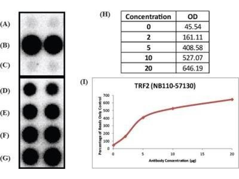 Immunoprecipitation (IP) image for anti-TBPL1 antibody (TBP-Like 1) (ABIN189464)