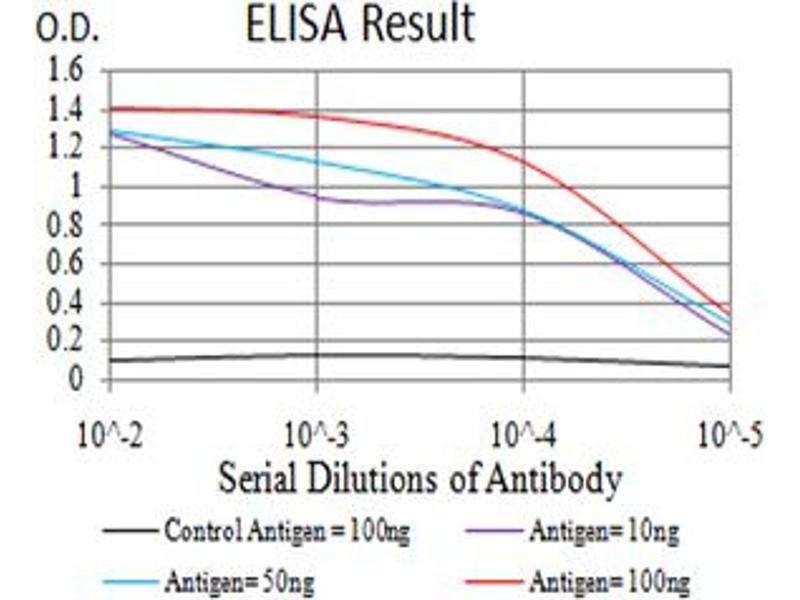 Image no. 1 for anti-Estrogen Receptor 1 (ESR1) (AA 530-542) antibody (ABIN5611310)