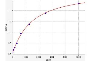 Image no. 1 for Cytochrome P450, Family 3, Subfamily A, Polypeptide 4 (CYP3A4) ELISA Kit (ABIN6966251)