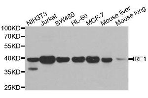 Image no. 3 for anti-Interferon Regulatory Factor 1 (IRF1) antibody (ABIN6142526)