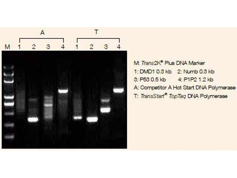 image for TransStart® TopTaq DNA Polymerase (ABIN5519570)