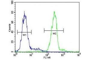 Image no. 2 for anti-Voltage-Dependent Anion Channel 1 (VDAC1) (AA 1-30) antibody (ABIN3029777)