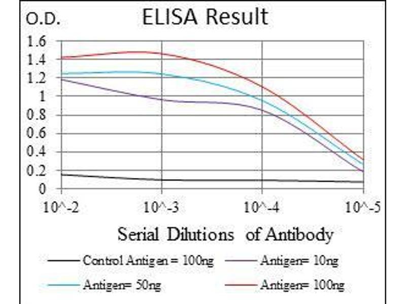 ELISA image for anti-Forkhead Box O1 (FOXO1) antibody (ABIN4880727)