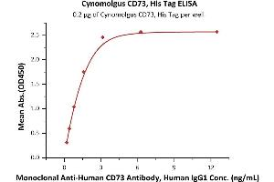Image no. 1 for 5'-Nucleotidase, Ecto (CD73) (NT5E) (AA 27-554) (Active) protein (His tag) (ABIN7013525)