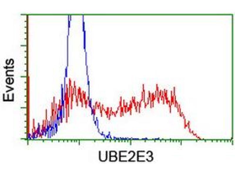 image for anti-Ubiquitin-Conjugating Enzyme E2E 3 (UBE2E3) antibody (ABIN1501617)