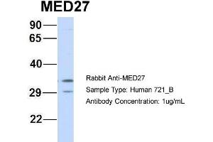 Image no. 1 for anti-Mediator Complex Subunit 27 (MED27) (Middle Region) antibody (ABIN2778099)