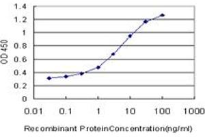 Image no. 1 for anti-Nuclear Factor (erythroid-Derived 2)-Like 2 (NFE2L2) (AA 71-170) antibody (ABIN518315)
