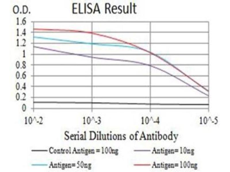 ELISA image for anti-Glutamate Receptor, Ionotropic, Kainate 5 (GRIK5) antibody (ABIN5681193)