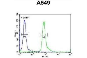 Image no. 1 for anti-Family with Sequence Similarity 46, Member D (FAM46D) (AA 210-239), (Middle Region) antibody (ABIN951716)