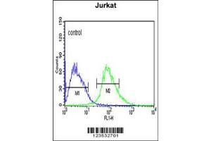 Image no. 1 for anti-Calcium Activated Nucleotidase 1 (CANT1) antibody (ABIN2158035)