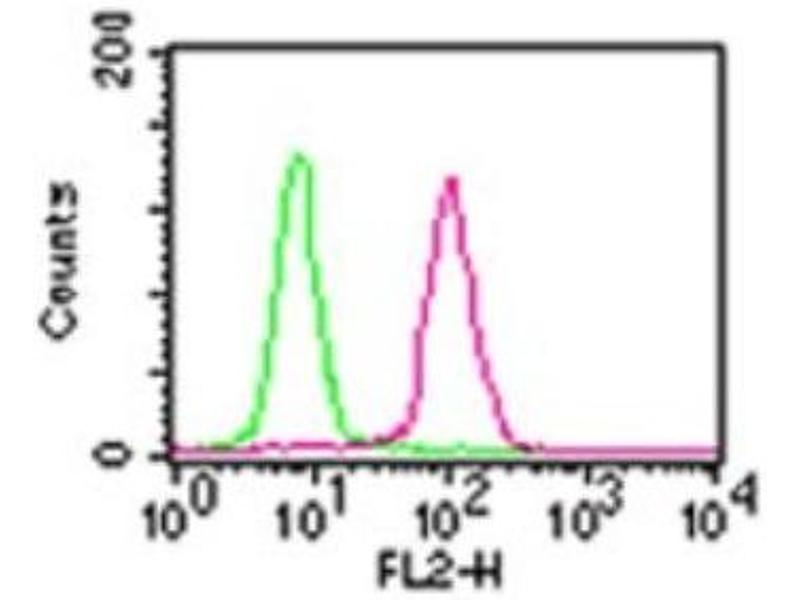 Flow Cytometry (FACS) image for anti-Nuclear Factor-KB P65 (NFkBP65) antibody (ABIN252655)