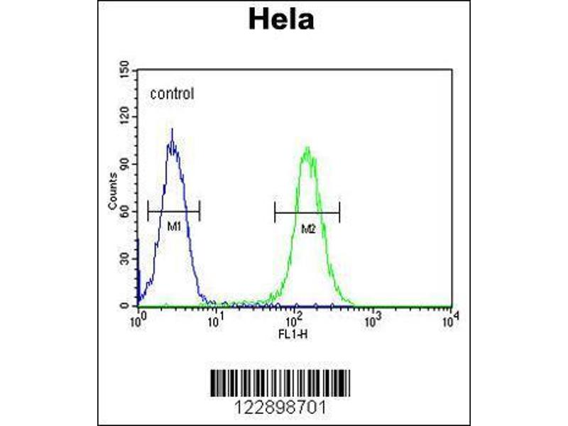 Flow Cytometry (FACS) image for anti-Forkhead Box L2 (FOXL2) (AA 3-29), (N-Term) antibody (ABIN654125)