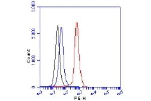 Flow Cytometry (FACS) image for anti-Regulatory Associated Protein of MTOR, Complex 1 (RPTOR) (AA 1-50) antibody (ABIN4351199)
