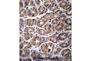 Image no. 1 for anti-Glycoprotein M6A (GPM6A) (AA 253-278), (C-Term) antibody (ABIN952592)