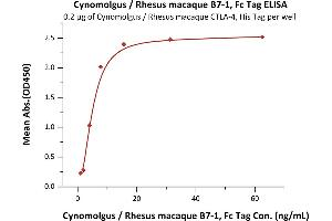 Image no. 1 for CD80 (CD80) (AA 35-242) (Active) protein (Fc Tag) (ABIN2870587)