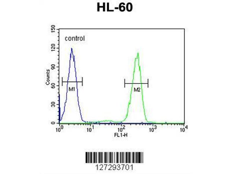 Flow Cytometry (FACS) image for anti-Aftiphilin (AFTPH) (AA 844-871), (C-Term) antibody (ABIN651958)