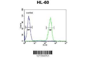 Image no. 2 for anti-Aftiphilin (AFTPH) (AA 844-871), (C-Term) antibody (ABIN651958)