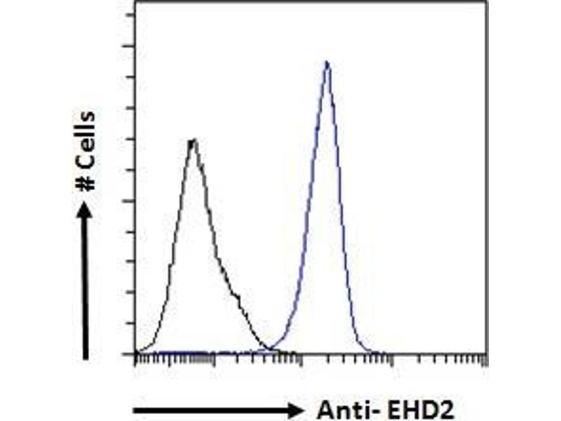 Image no. 3 for anti-EH-Domain Containing 2 (EHD2) (C-Term) antibody (ABIN185287)