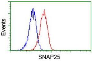 Image no. 5 for anti-Synaptosomal-Associated Protein, 25kDa (SNAP25) antibody (ABIN1501017)