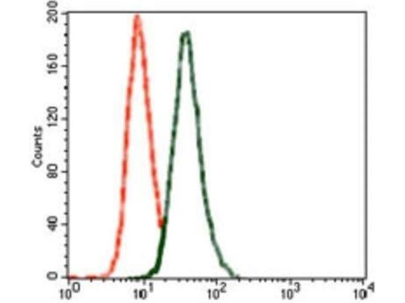 Flow Cytometry (FACS) image for anti-Glutamate Receptor, Ionotropic, AMPA 2 (GRIA2) antibody (ABIN4314578)