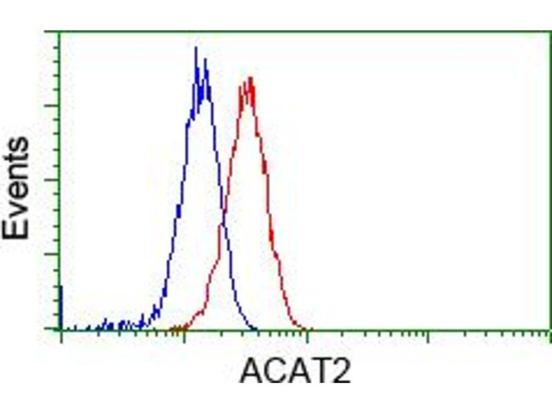 Image no. 8 for anti-Acetyl-CoA Acetyltransferase 2 (ACAT2) antibody (ABIN1496398)